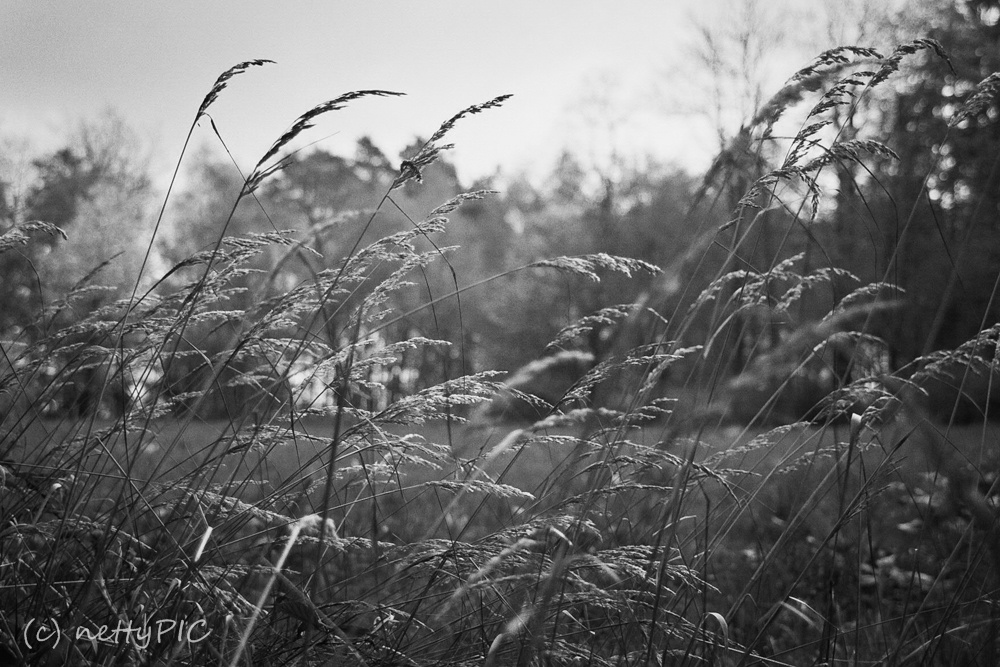 Waldfotos