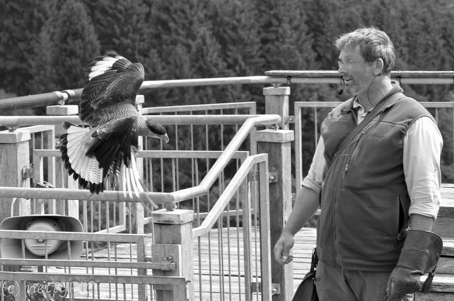 Mensch und Vogel – Adlerwarte Teil 4  / Birds of prey # 4
