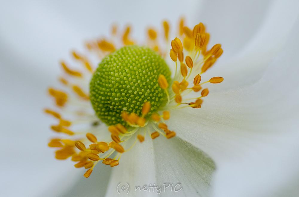 Monday Flowers #7