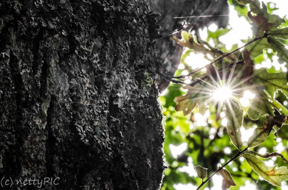 "Fotoprojekt 26| Dreizehn ""Holz"""