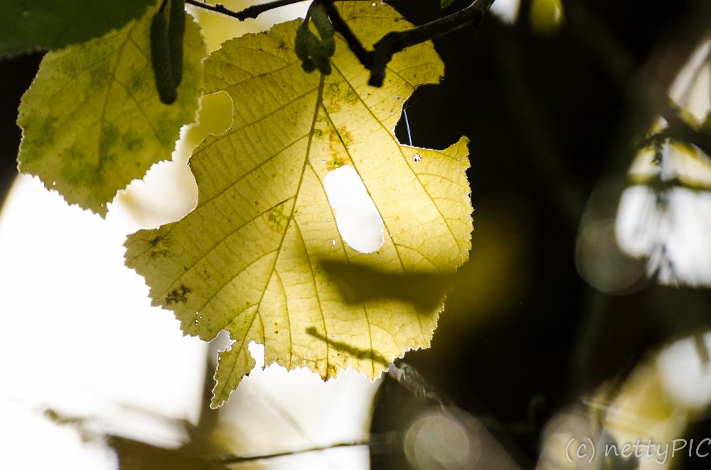 Spätherbst / Late autumn