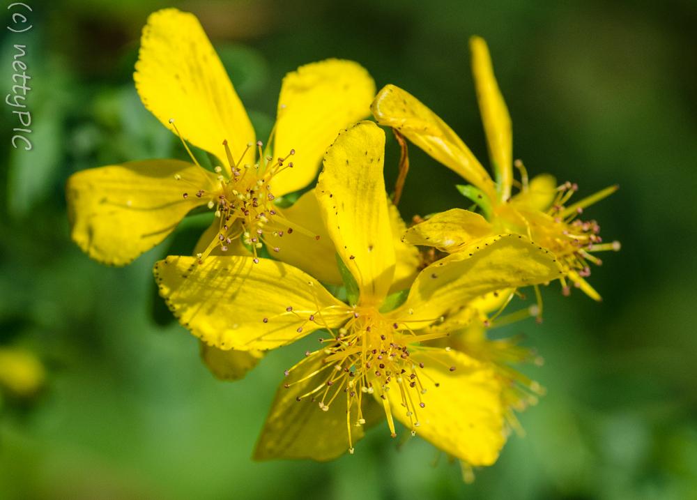 Monday Flowers #5