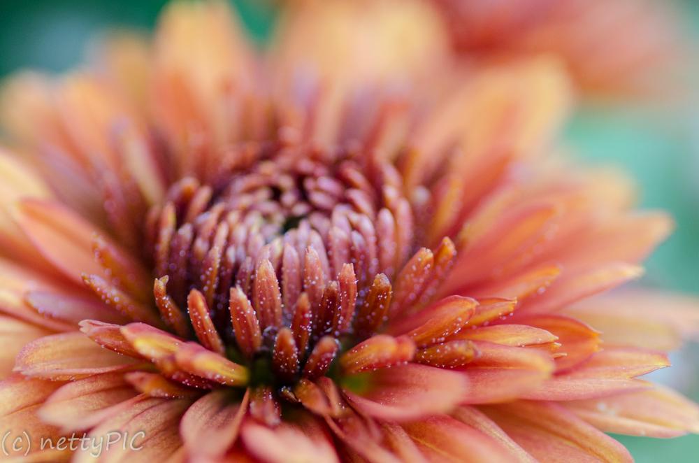 Monday Flowers #8