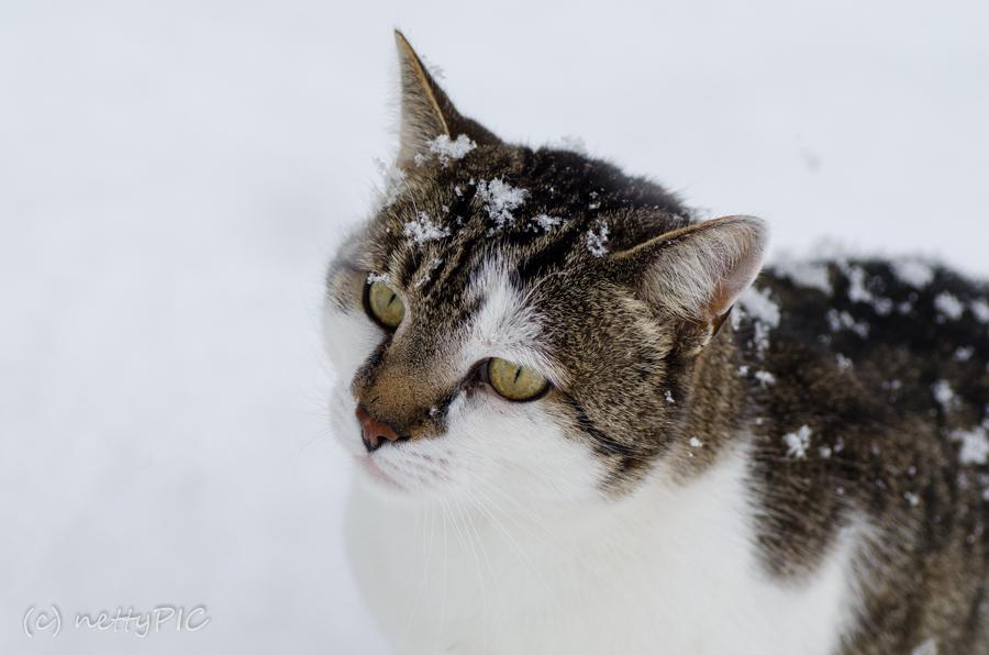 Wo bleibt der Schnee ?