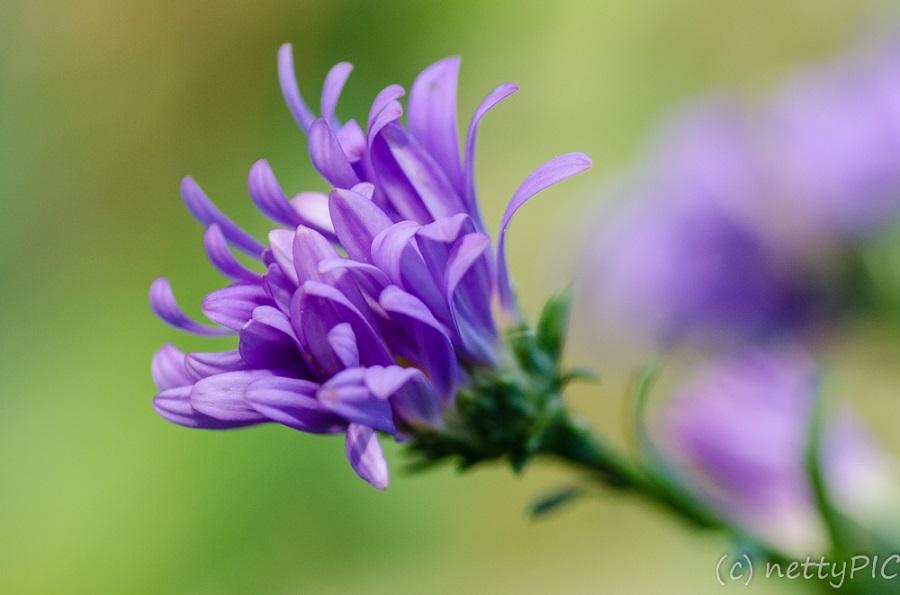 Monday Flowers # 14