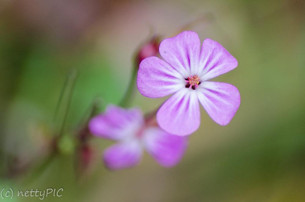Monday Flowers # 10