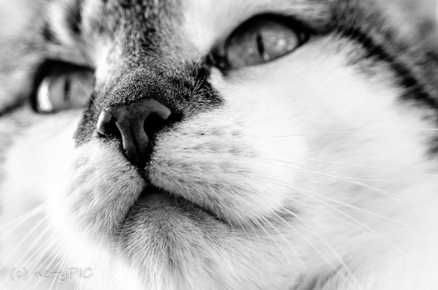 Katzenportrait / cat