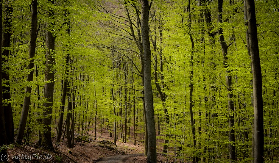 Wald / Forest
