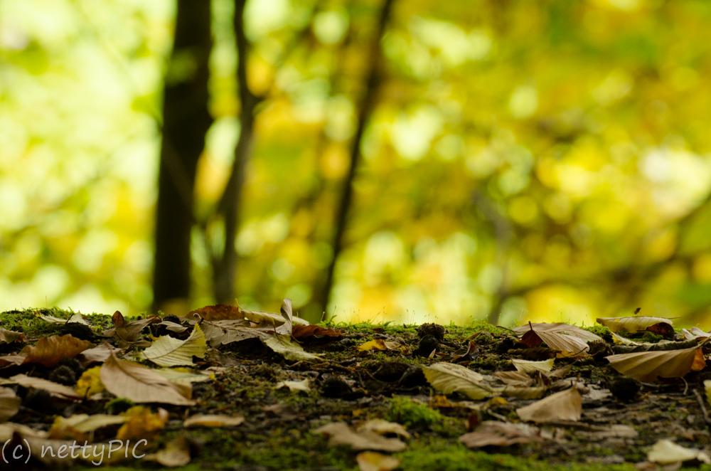 Herbstwald / Autumn – Fotoprojekt 26|Dreizehn