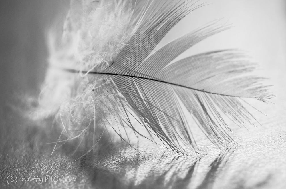 Feder / Feather