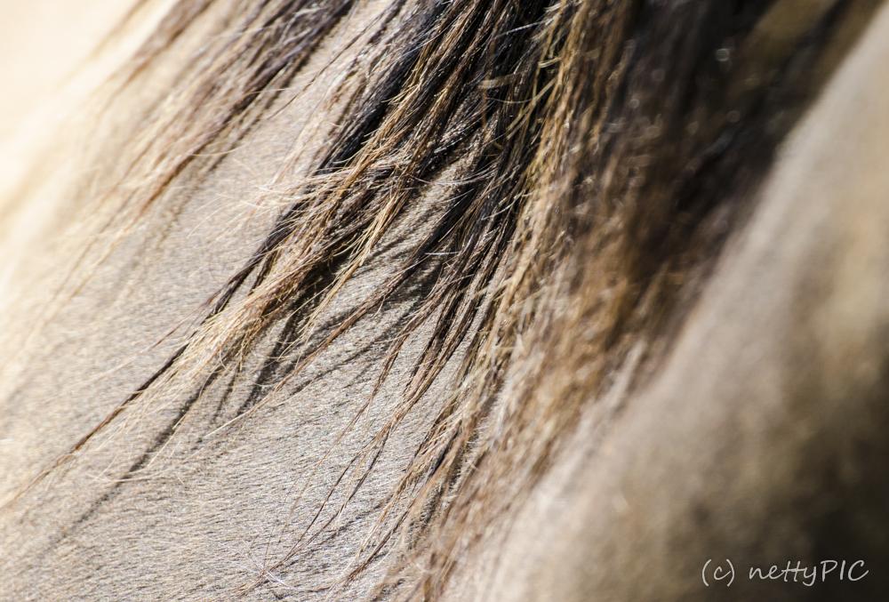 Pferde im Sommerlicht