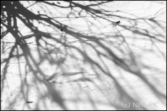 Schatten im Schnee