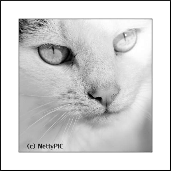 Katzennase…