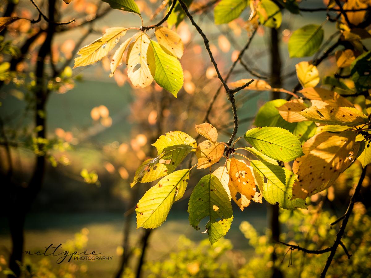 Herbstlicht #1