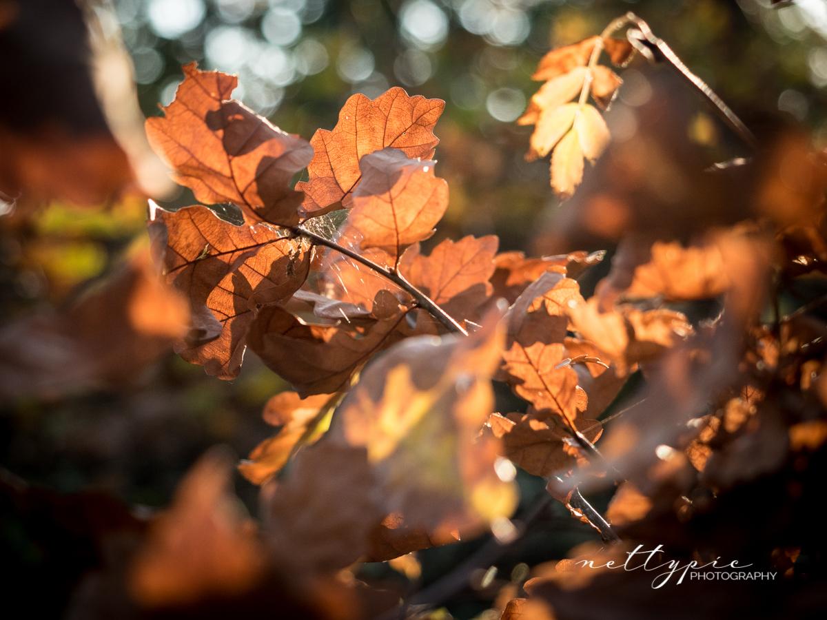 Herbstlicht #2