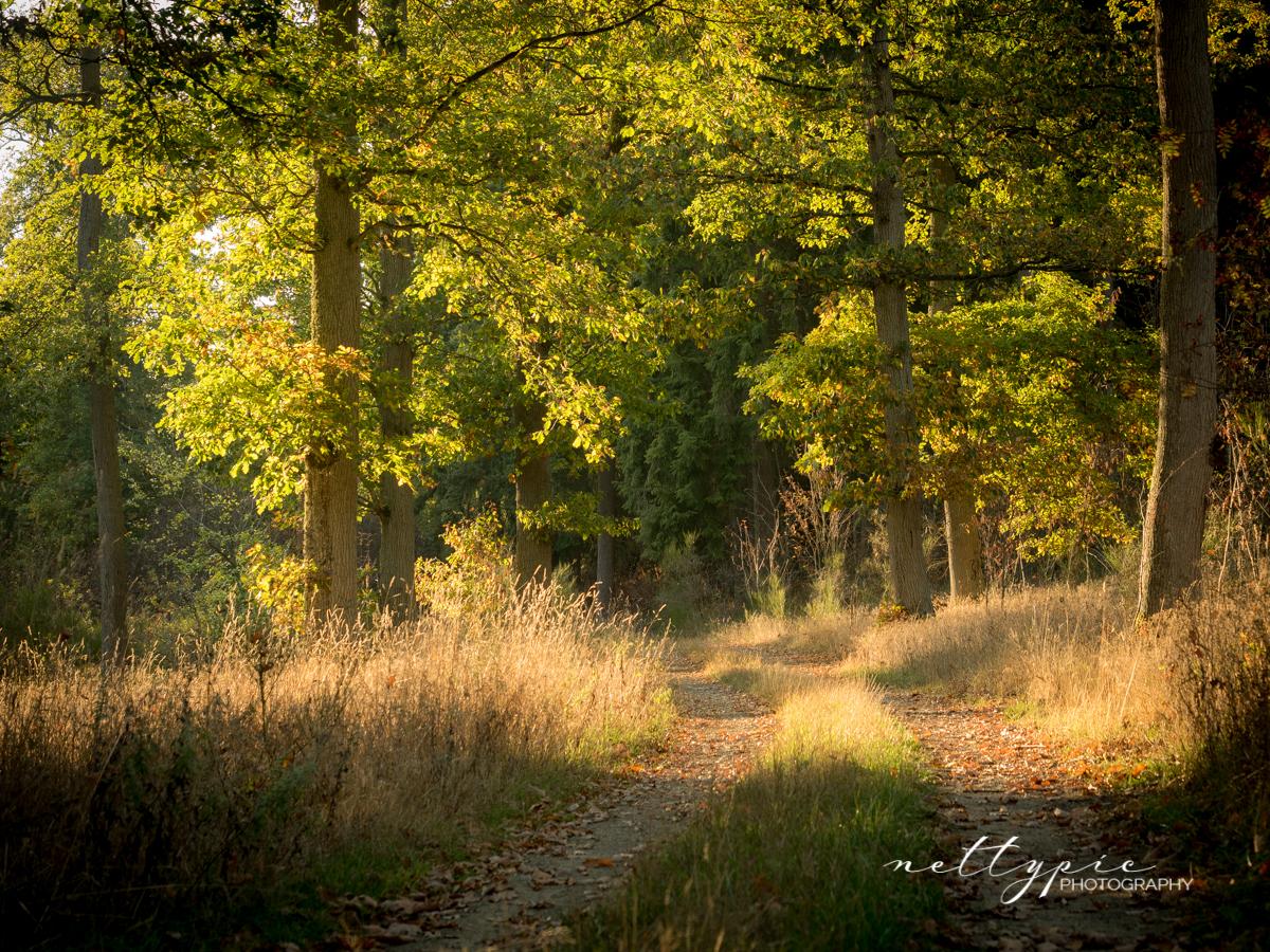 Herbstlicht #3