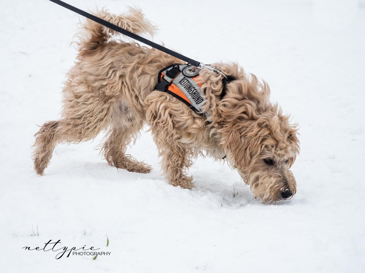 Schlittenhunderennen #5