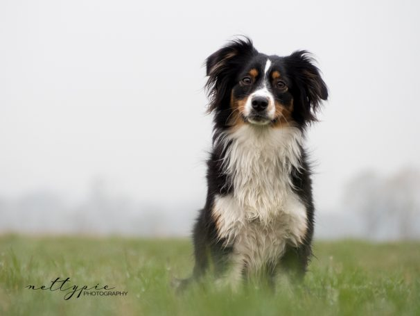 Workshop Hundefotografie #1 – Amy