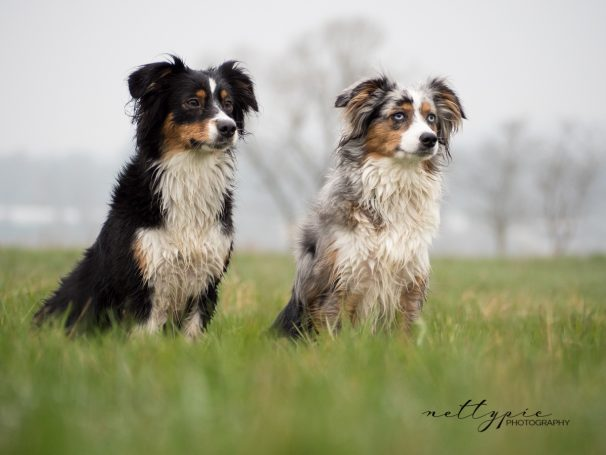 Workshop Hundefotografie #3 – Luna und Amy