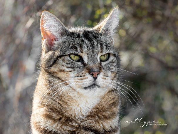 Katzenportraits #2