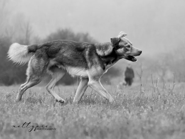 Workshop Hundefotografie #9 – Hundeportraits in Schwarz-Weiß