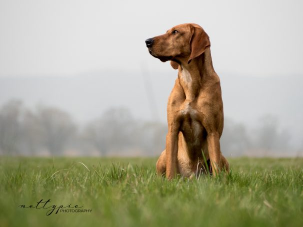 Workshop Hundefotografie #6 – Barney