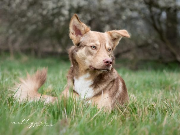 Workshop Hundefotografie #4 – Benji