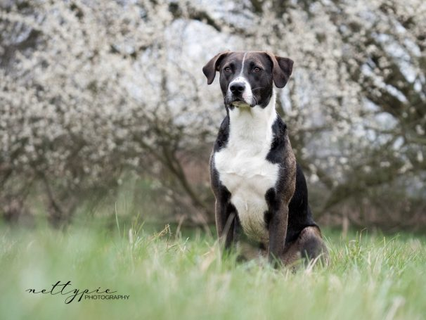 Workshop Hundefotografie #5 – Biju
