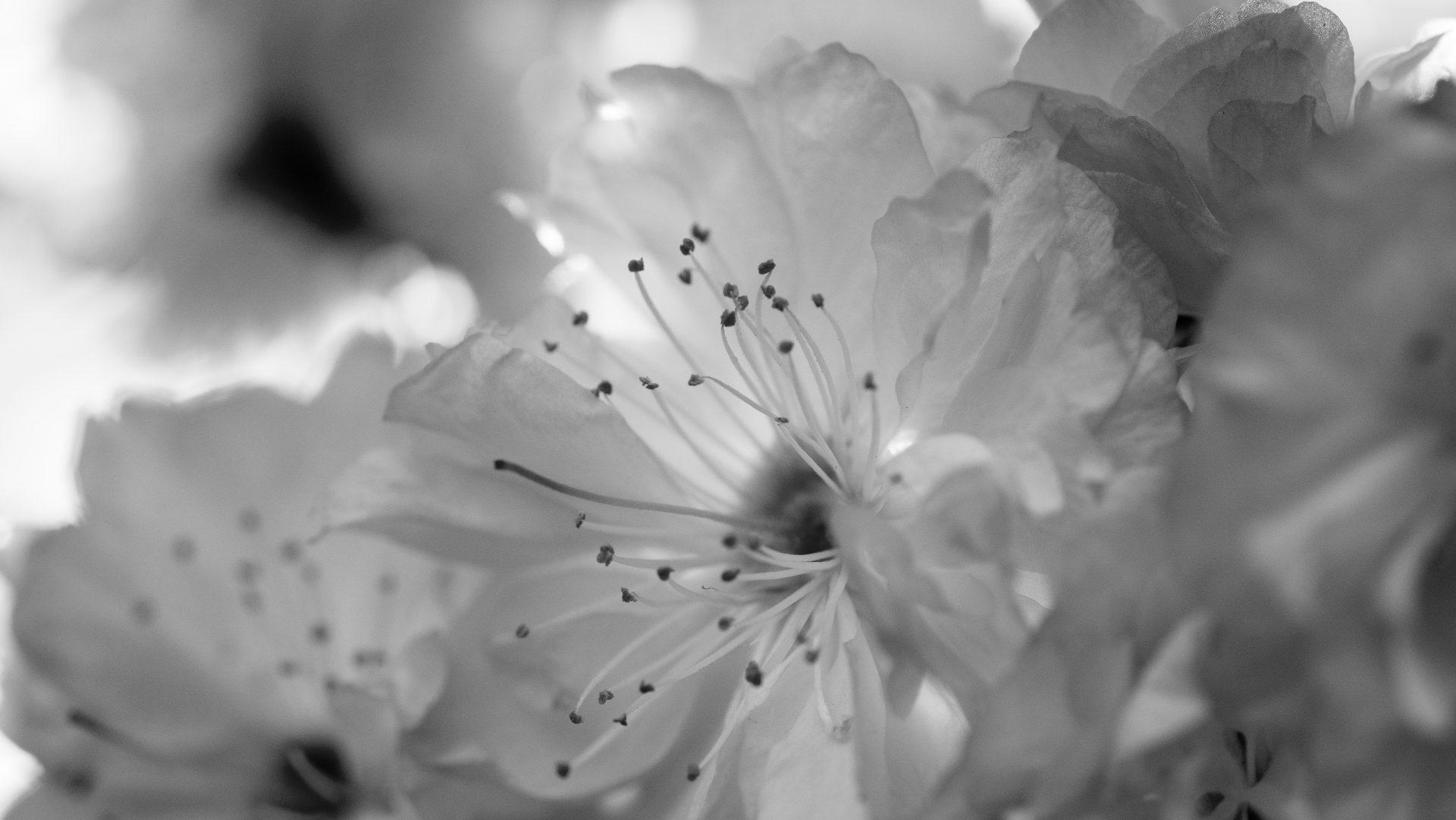 Nettypic photography