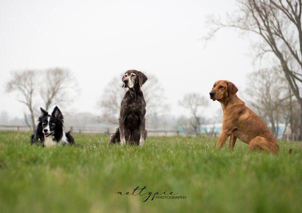 Workshop Hundefotografie #7 – Barney, Motti und Falco