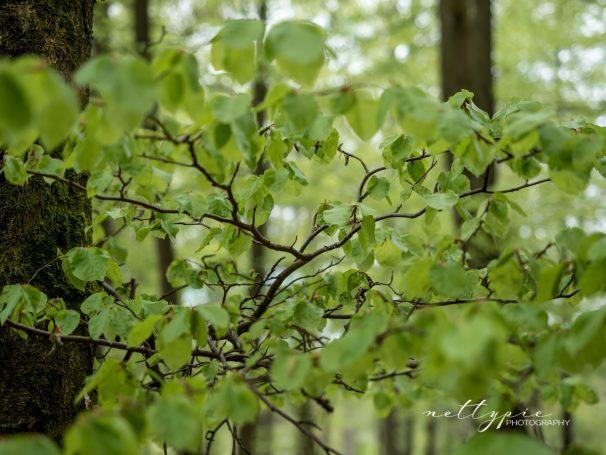 Frühlingswald #2