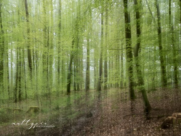 Frühlingswald #1
