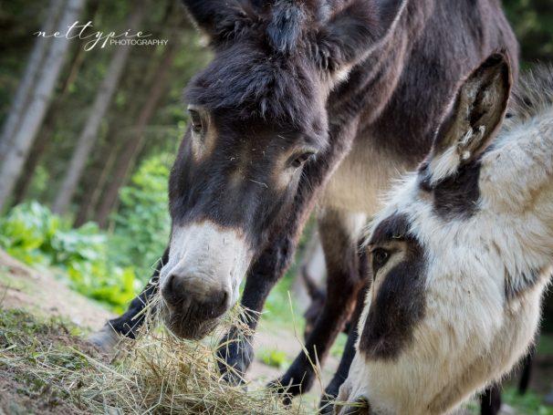 Fotowalk im Wildgehege Herborn – Esel